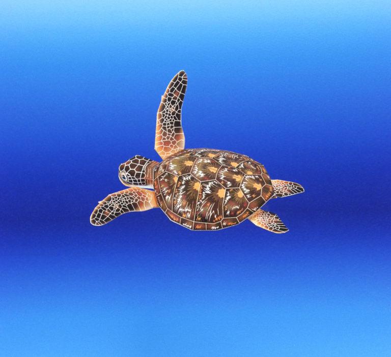 月刊ダイビングワールド掲載、海の生き物のペーパークラフト4月号から6月号