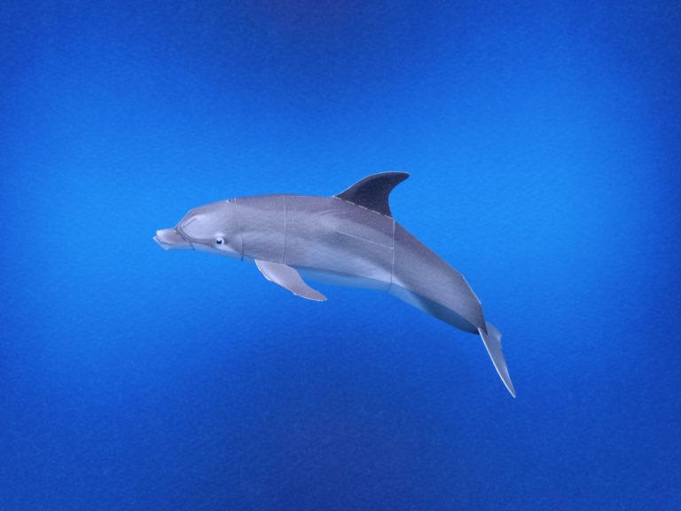 月刊ダイビングワールド掲載、海の生き物のペーパークラフト10月号から12月号