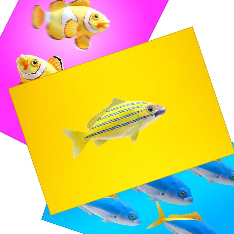 海水魚のノベルティグッズ、ポストカード無料テンプレート。「海水魚のポストカードをお部屋に飾る、DIYアイテム」海水魚ポストカード01