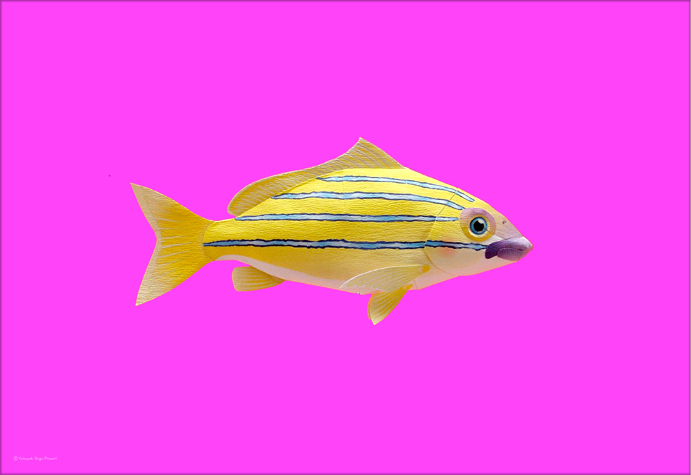 熱帯魚のポストカード